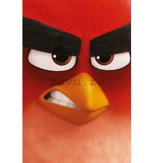 Poster - Angry Birds (1)