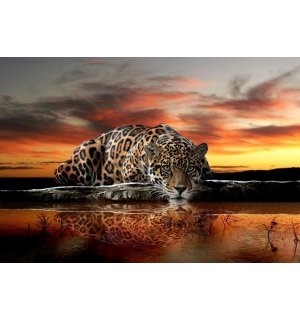 Tablou canvas: Jaguar - 75x100 cm