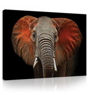 Tablou canvas: Elephant (detaliu) - 75x100 cm