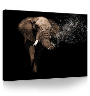 Tablou canvas: Elefant (3) - 75x100 cm