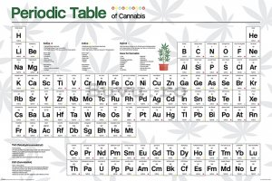 Poster - Periodic Table (Cannabis)