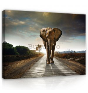 Tablou canvas: Elefant (4) - 80x60 cm